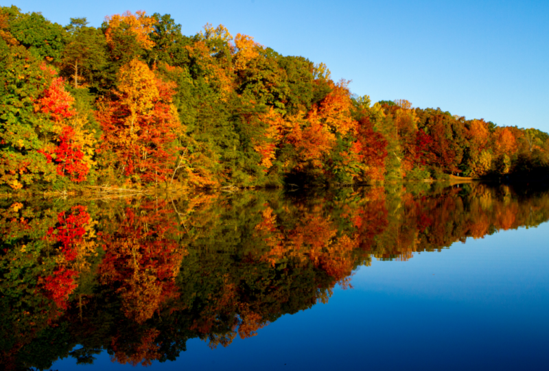 Fall Color Trends 2014